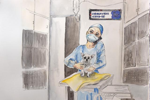 Veterinarians, animal health technicians, veterinary nurse, RVN, DVM, RVT, coronavirus, Covid-19, ethical dilemma, ethical challenges