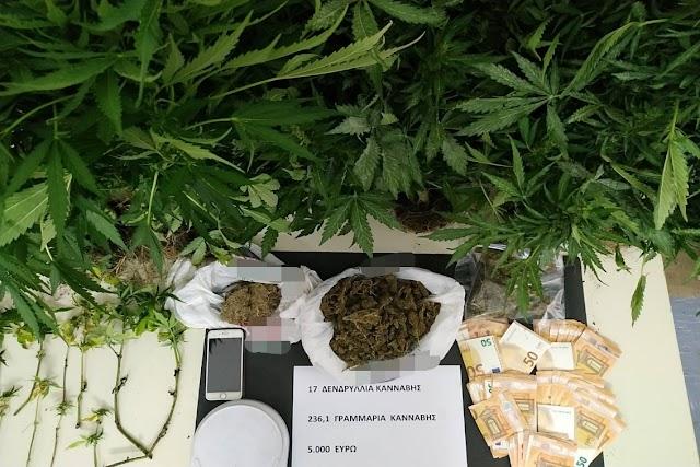 Συνελήφθη στη Ρόδο ημεδαπός για κατοχή και καλλιέργεια κάνναβης