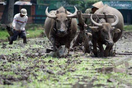 http://tipspetani.blogspot.com/2016/05/alat-pertanian-tradisional-yang-masih.html