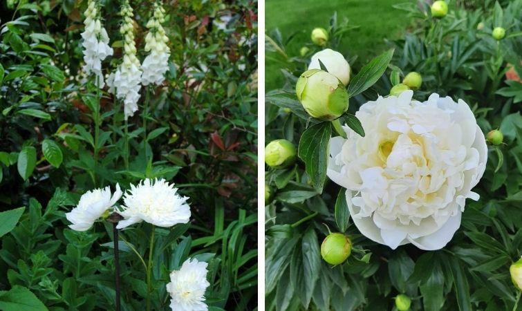 Für den weiße Garten