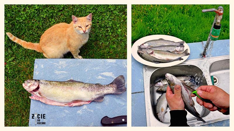 pstrag, sprawianie ryb, patroszenie ryb, patroszenie pstraga, sprawianie pstraga, karp wedzony, jak wedzic karpia, wedzenie pstraga, wedzenie karpia, wedzenie makreli, domowe wedzenie, jak wedzic ryby, sposoby wedzenia ryb, nasalanie wedzonych ryb, solenie na sucho, solenie na mokro, blog kulinarny, zycie od kuchni, blog zycie od kuchni