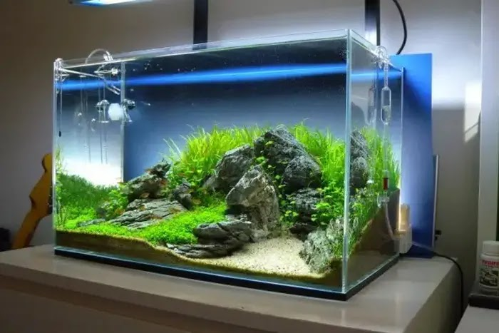 tips memelihara ikan hias di rumah