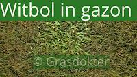 witbol in gazon