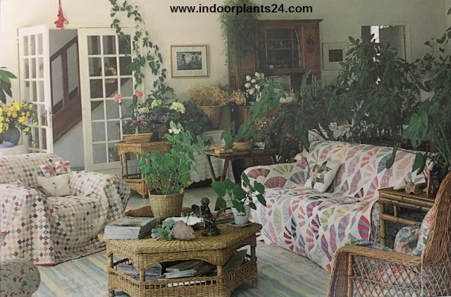 Ultimate Indoor Plant Decoration Ideas
