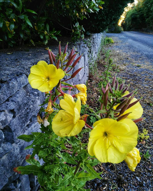 stone wall, yellow flowers