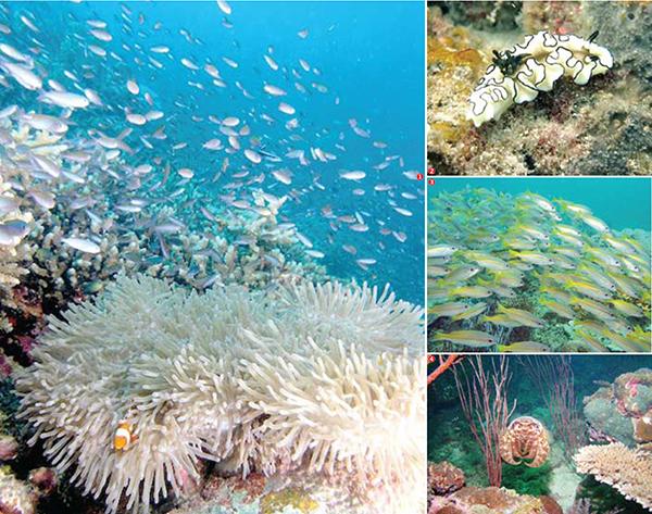 Keindahan Bawah Laut Pulau Tiga