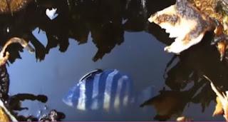 أكتشف 9 مخلوقات بحرية غربية بعد حدوث تسونامي