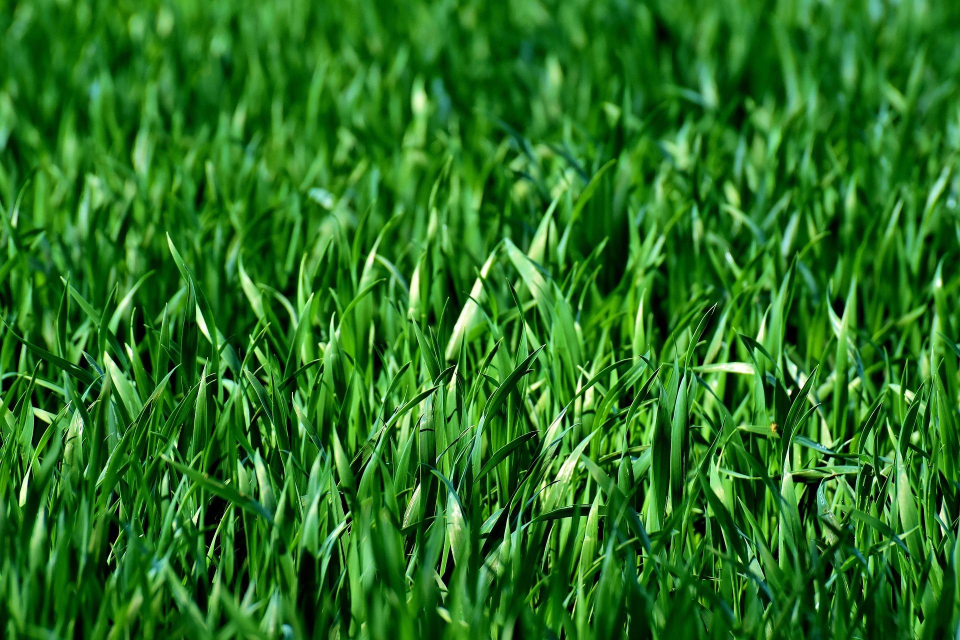 Beautiful Lawns Fast