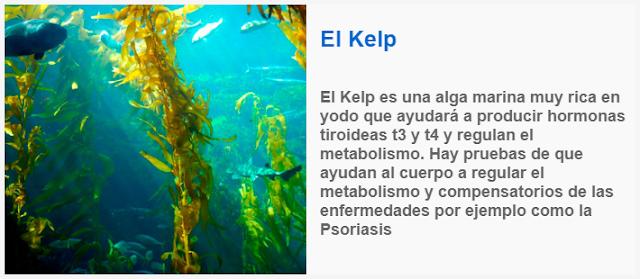 El Kelp es una alga marina muy rica en yodo que ayudara a producir hormonas tiroideas t3 y t4