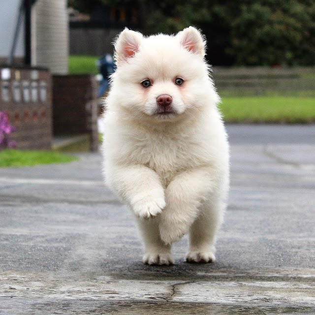 White Dog Breeds List 2019 - Top 10 Popular Black and White Dogs