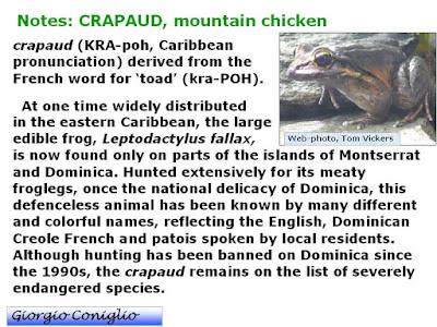 frog (anuran); 'mountain chicken'; froglegs; Leptodactylus fallax; Giorgio Coniglio; web-photo