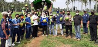 Anggota DPRD Lampung Panen Raya Semangka di Pringsewu