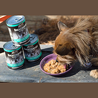 Merrick Backcountry Canned Dog Food review