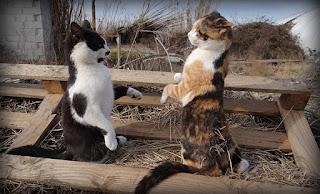 Cómo presentar un gato nuevo a tu gato