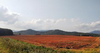 秋のそば畑(白絨毯の畑で)