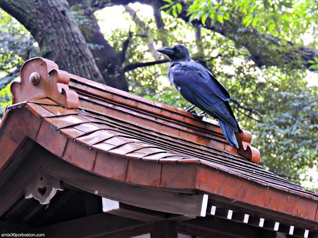 Santuario Meiji, Tokio