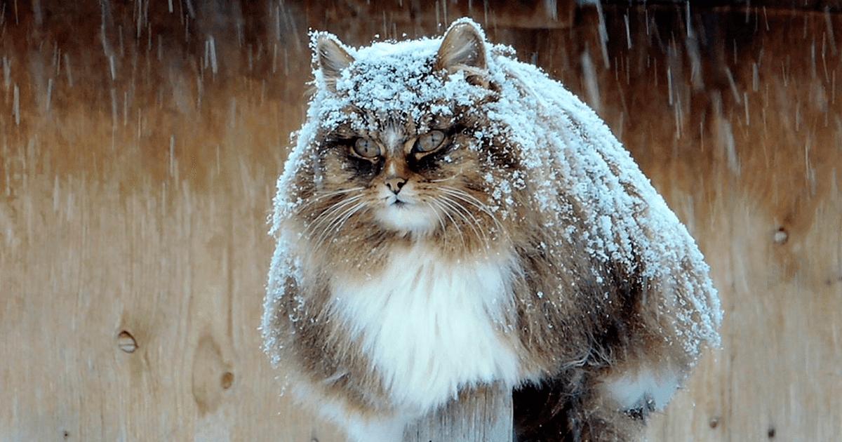 Youtube Cat Famiy