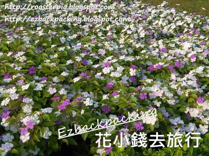 添馬公園花