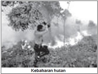 Kebakaran hutan salah satu Penyebab Utama Kerusakan Flora dan Fauna di Indonesia