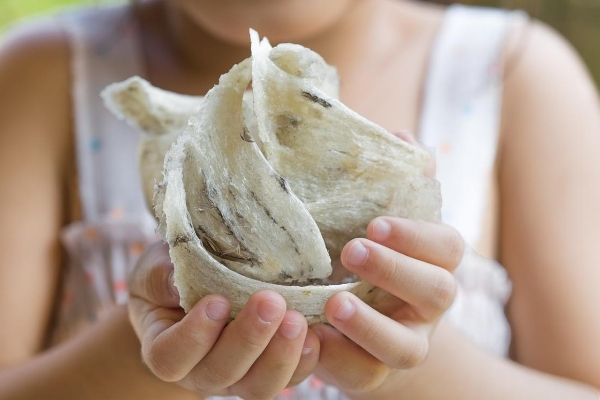 manfaat minuman ekstrak sarang burung walet