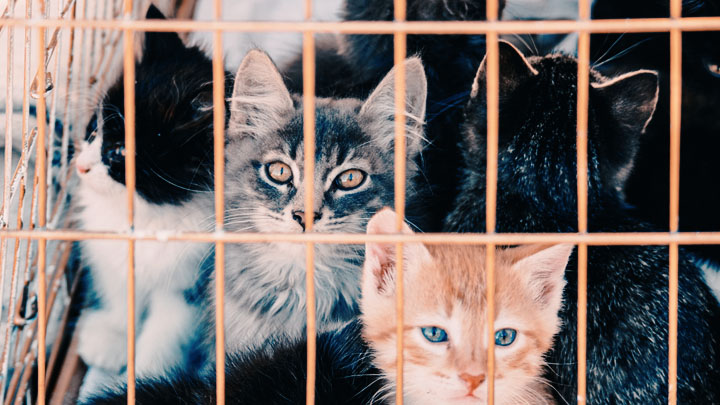 outdoor-cat-shelter-for-multiple-cats