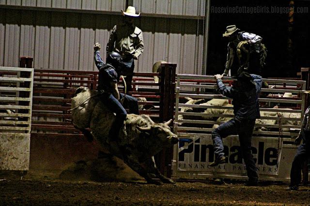 #rodeo #cowboys #bullriding #bulls