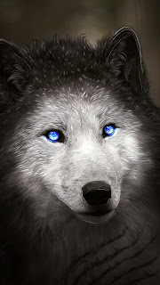 Blue Wolf Mobile HD Wallpaper