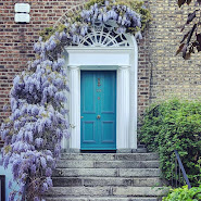 Dublin door with blooming wisteria on Haddington Road