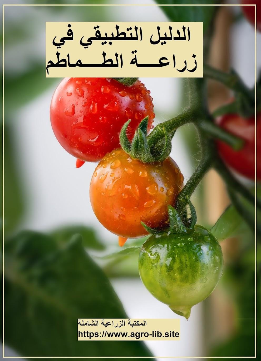 كتاب : الدليل التطبيقي في زراعة الطماطم