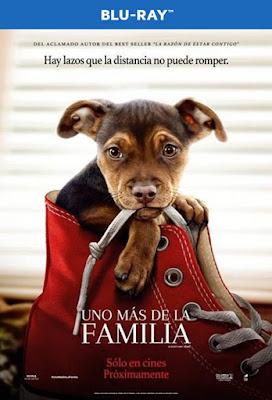 A Dog's Way Home 2019 BD25 Latino