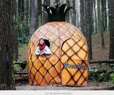 10 Spot Hunting Foto Keren Hutan Pinus Asri Karangasem | anekawisataindonesia.com