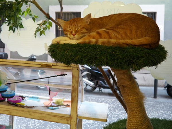 barcelona espai de gats