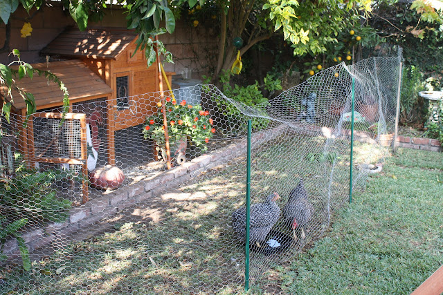 keeping chickens out of the garden