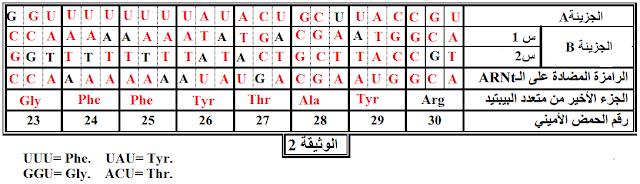 جدول العلاقة بين العناصر الداخلة في تركيب البروتين