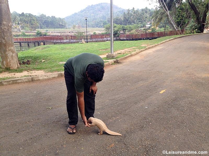 Pinnawala Zoo Sri Lanka Review