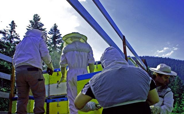Η μεταφορά των μελισσιών μας: Όλη η διαδικασία! Οι σοβαρότεροι κίνδυνοι και μερικές εμπειρίες...