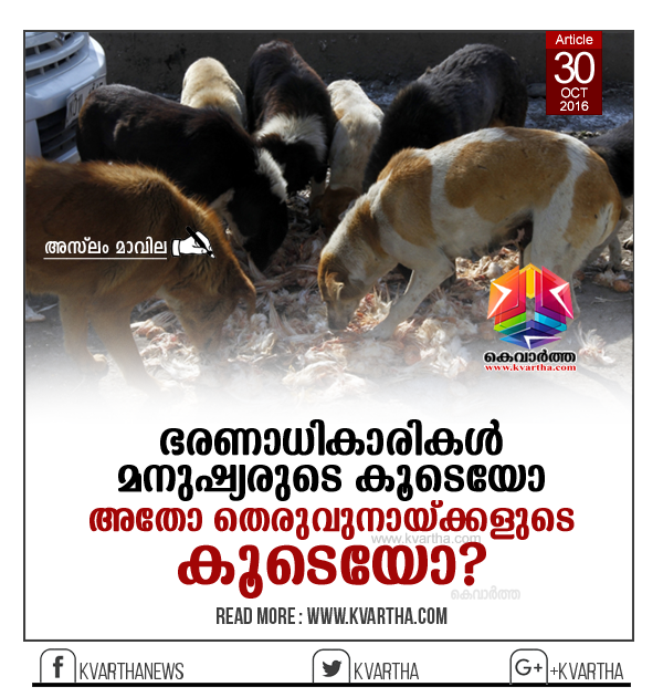Article, Dog, attack, Assault, Stray dog issues in Kerala, Thiruvananthapuram, Varkala, Aslam Mavila, Waste, Cleaning, Pharmacy.