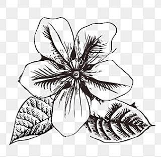 Sketsa Bunga Melati