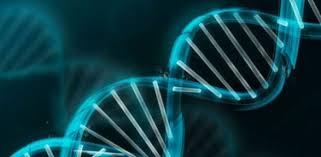 دولة الخلية البشرية وحارس الجينوم