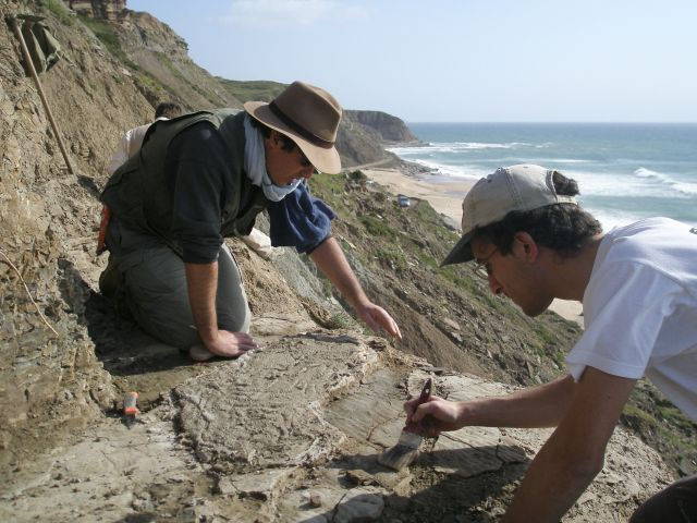 One of the longest pterosaur trails found in Portugal