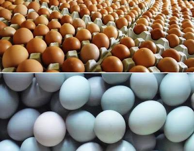 distributor telur bebek Bandung