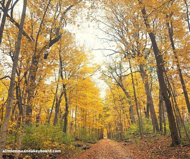 Golden avenue of trees beckons at Bliss Woods in Sugar Grove.