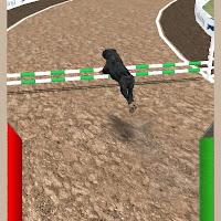 لعبة سباق الكلاب