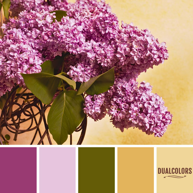 color_paleta_207