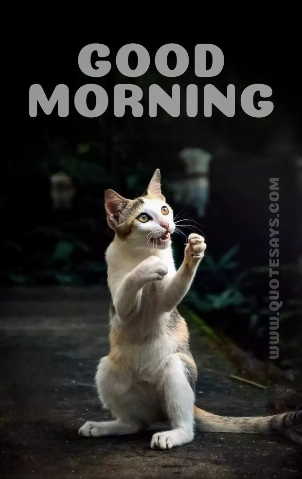 Beautiful Good Morning Cat