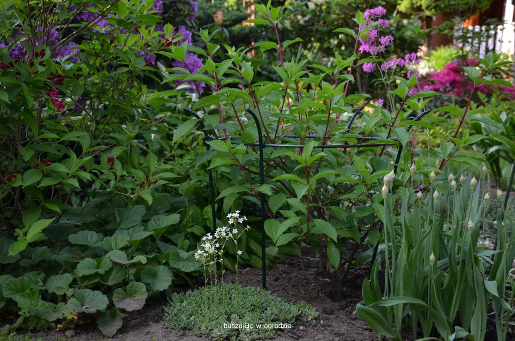 podpory do roślin