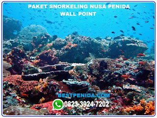 Paket snorkeling Nusa Penida Wall point
