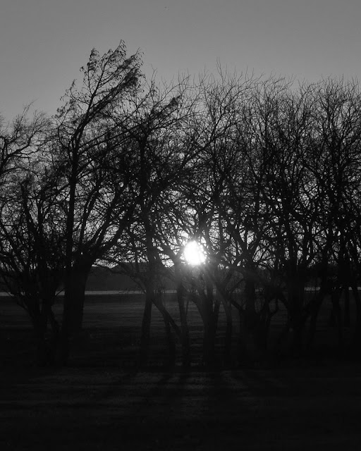 Sunset Trees at Robertson Park
