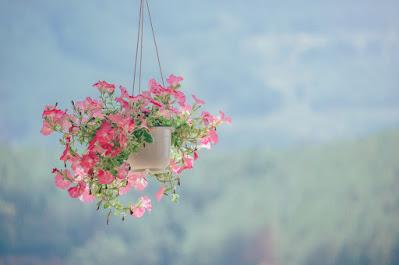 صورة قصرية ورد جميلة جدا
