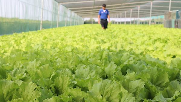 烟花颱風撲來 農糧署籲強化農作物防災及防治病蟲害